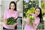 NSƯT Trịnh Kim Chi thu hoạch trái cây tại vườn biệt thự 200m2