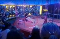 Nghệ sĩ xiếc thú bị sư tử tấn công ngay trên sân khấu