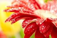 Những loại hoa may mắn, hút tài lộc được bày trong phòng khách, nhà giàu vẫn luôn làm thế