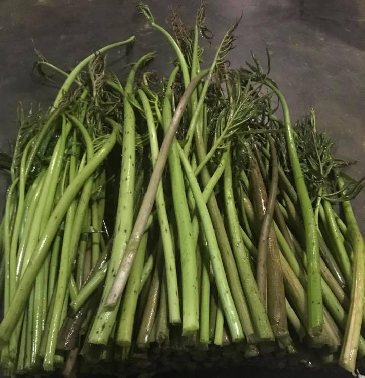 Xưa dùng để chống đói, nay trồng loại rau này không chỉ thoát nghèo mà còn kiếm tiền triệu mỗi ngày-3