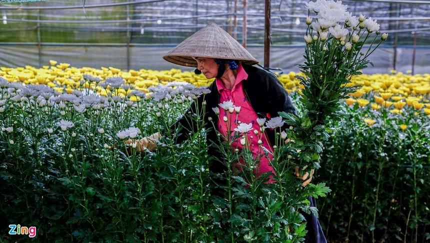 Hoa rớt giá, Đà Lạt mong TP.HCM mở lại chợ Đầm Sen-3