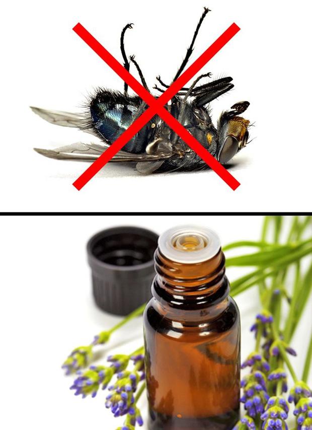 Mẹo vặt giúp diệt trừ 10 loại côn trùng nguy hiểm này trong nhà-3