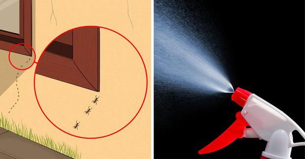 Mẹo vặt giúp diệt trừ 10 loại côn trùng nguy hiểm này trong nhà-4
