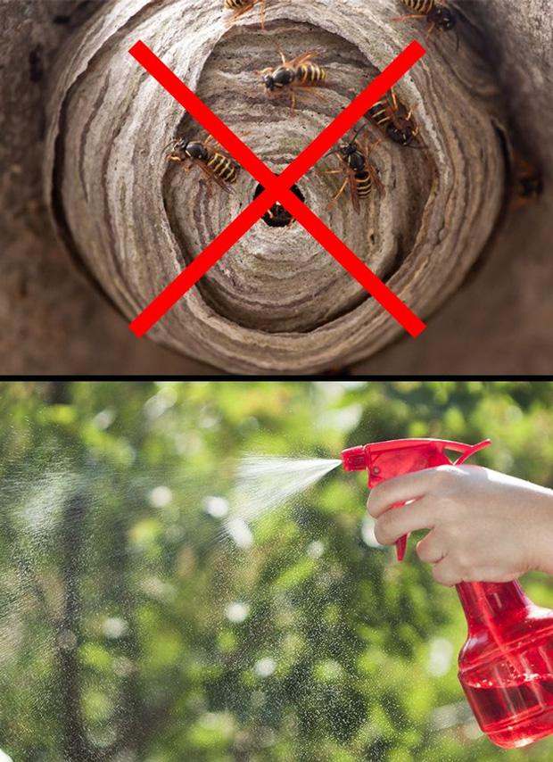 Mẹo vặt giúp diệt trừ 10 loại côn trùng nguy hiểm này trong nhà-6