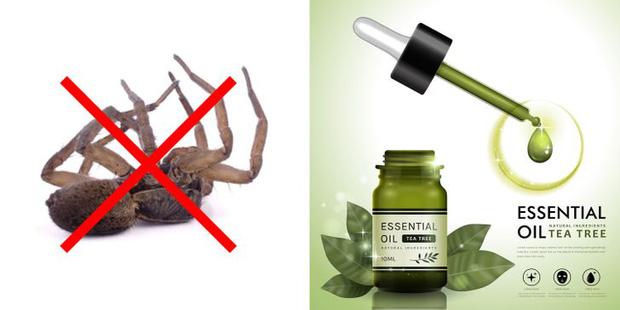 Mẹo vặt giúp diệt trừ 10 loại côn trùng nguy hiểm này trong nhà-7
