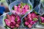 Biến đồng hoang thành đầm sen khổng lồ, anh nông dân lập kỷ lục triệu bông hoa-8