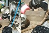 Nắng nóng, rắn hổ mang chui vào nhà dân tu vội nước từ vòi