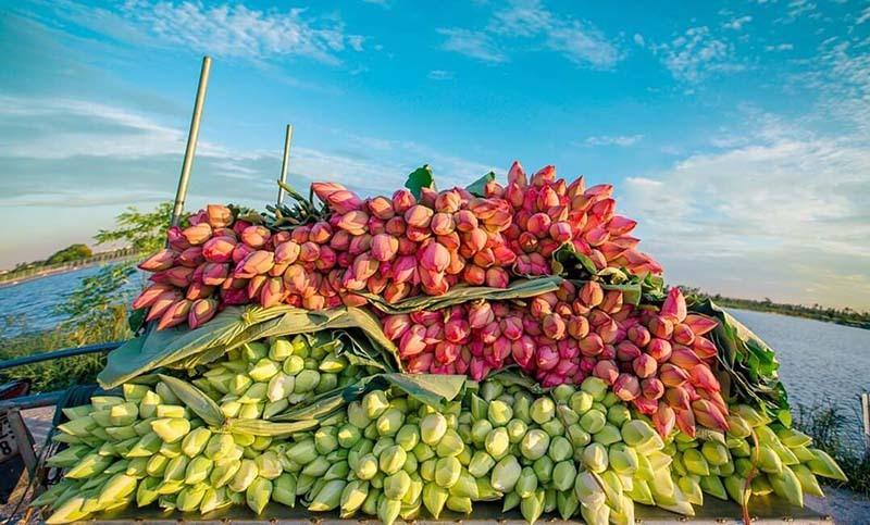 Biến đồng hoang thành đầm sen khổng lồ, anh nông dân lập kỷ lục triệu bông hoa-7
