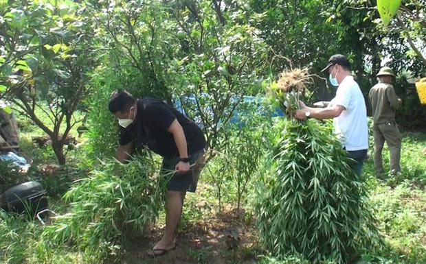 Lai lịch người đàn ông Pháp trồng cả vườn cần sa ở bãi giữa sông Hồng-1