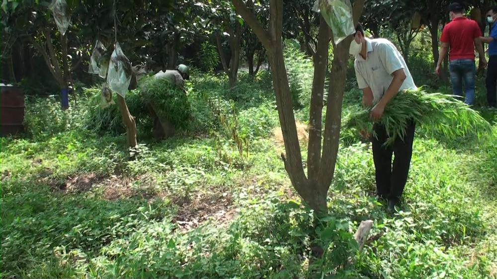 Lai lịch người đàn ông Pháp trồng cả vườn cần sa ở bãi giữa sông Hồng-2