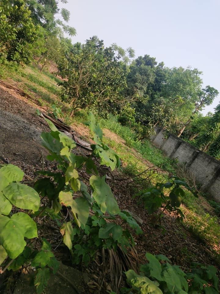 Mỗi tháng tiết kiệm ít nhất 1 chỉ vàng, mẹ ở Hà Nội sau gần 10 năm đã có 2 mảnh đất nền ưng ý-3