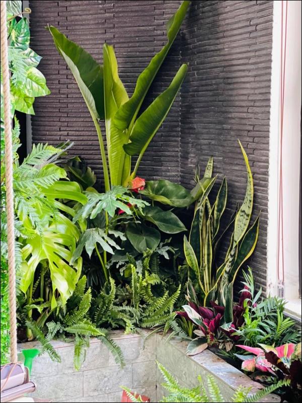 Hồng Đăng tự tay chăm chút cho khu vườn nhỏ trong biệt thự hoàng tráng2 mặt tiền tọa lạc ngay trung tâm Tp.Hà Nội-5