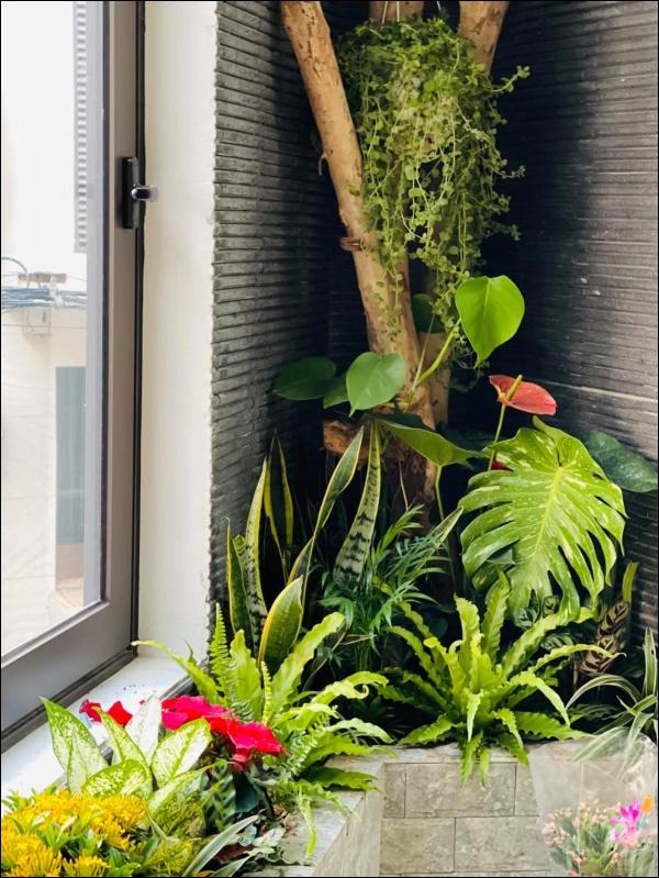 Hồng Đăng tự tay chăm chút cho khu vườn nhỏ trong biệt thự hoàng tráng2 mặt tiền tọa lạc ngay trung tâm Tp.Hà Nội-4