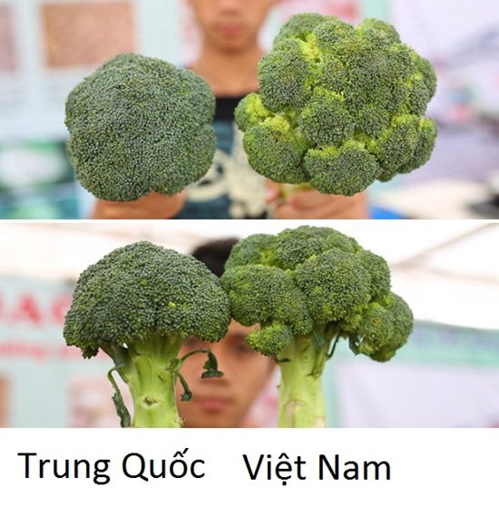 20 cách phân biệt rau củ Trung Quốc và Việt Nam, nắm chắc để tránh mua nhầm-1