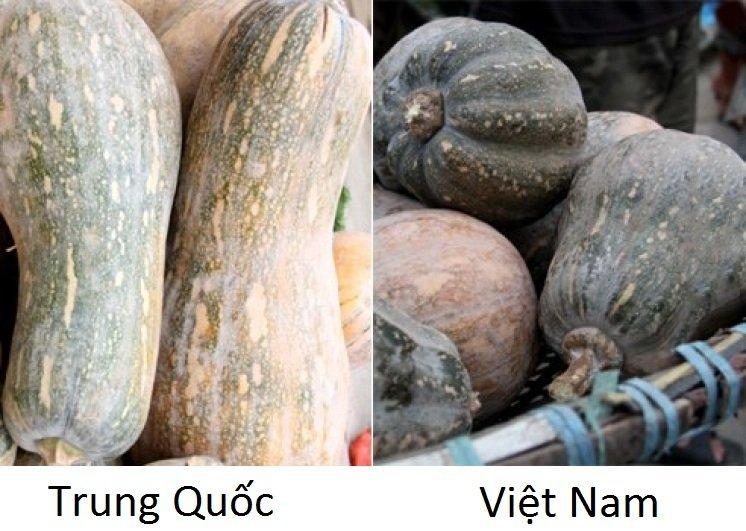 20 cách phân biệt rau củ Trung Quốc và Việt Nam, nắm chắc để tránh mua nhầm-5