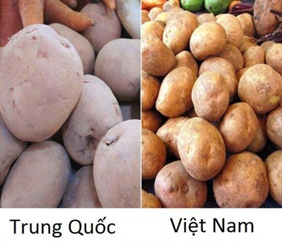 20 cách phân biệt rau củ Trung Quốc và Việt Nam, nắm chắc để tránh mua nhầm-7