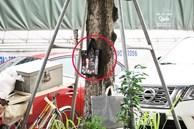Bí ẩn 'túi đựng xác thai nhi, xin đừng lấy' treo ở gốc cây ven đường