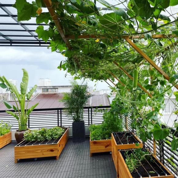 Vườn rau sạch trong biệt thự 40 tỷ của Lê Hoàng (The Men)-5