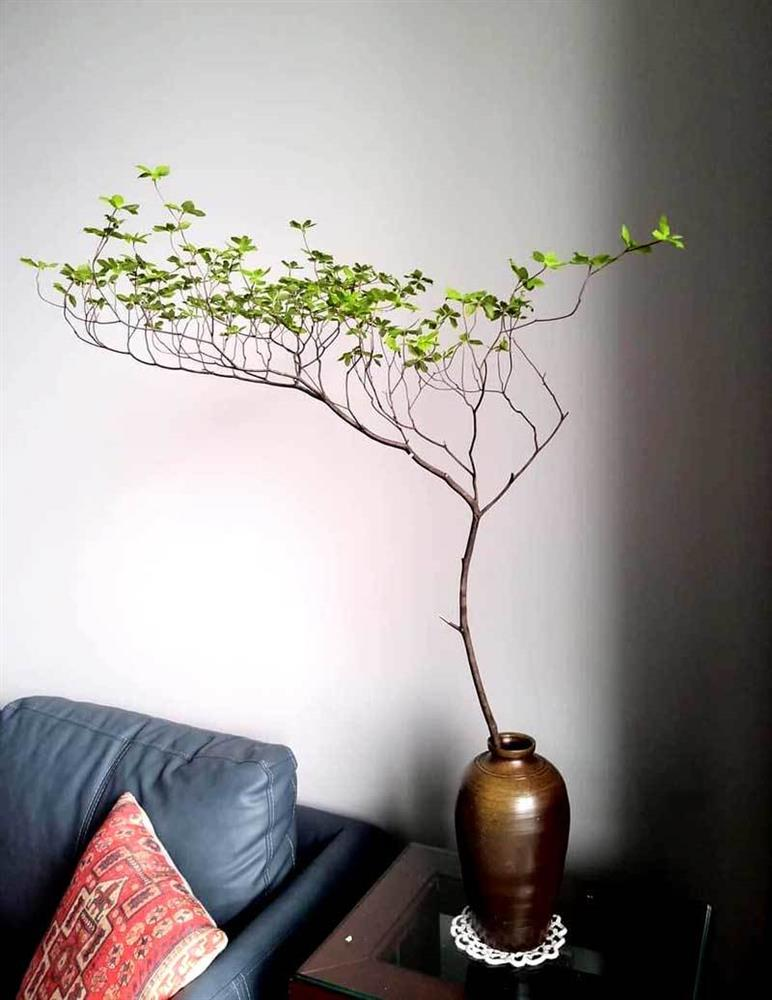 Hà thành mùa lạ, tranh nhau mua cành cây khẳng khiu, toàn lá giá tiền triệu-2