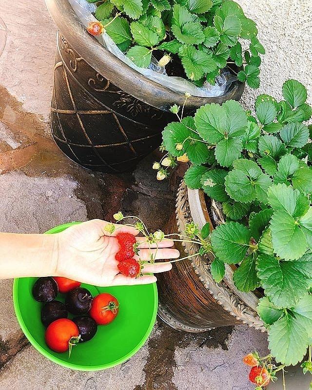 Ngắm khu vườn cây nào cũng trĩu quả và hoa rực rỡ trong biệt thự triệu đô ở Mỹ của Phạm Hương-7