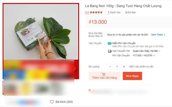 Hết lá khô 1.000 đồng, đến lượt lá bàng tươi được hét giá 100.000 đồng/kg-1