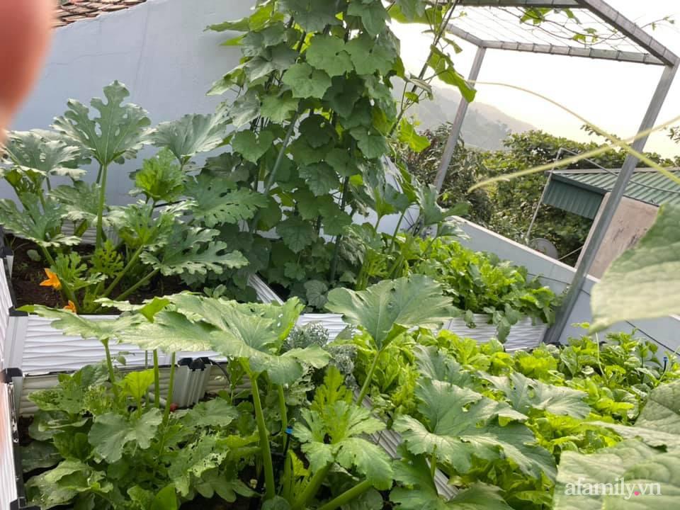 Khu vườn sân thượng chỉ 15m² nhưng quanh năm bội thu rau quả sạch của mẹ đảm ở Lào Cai-1