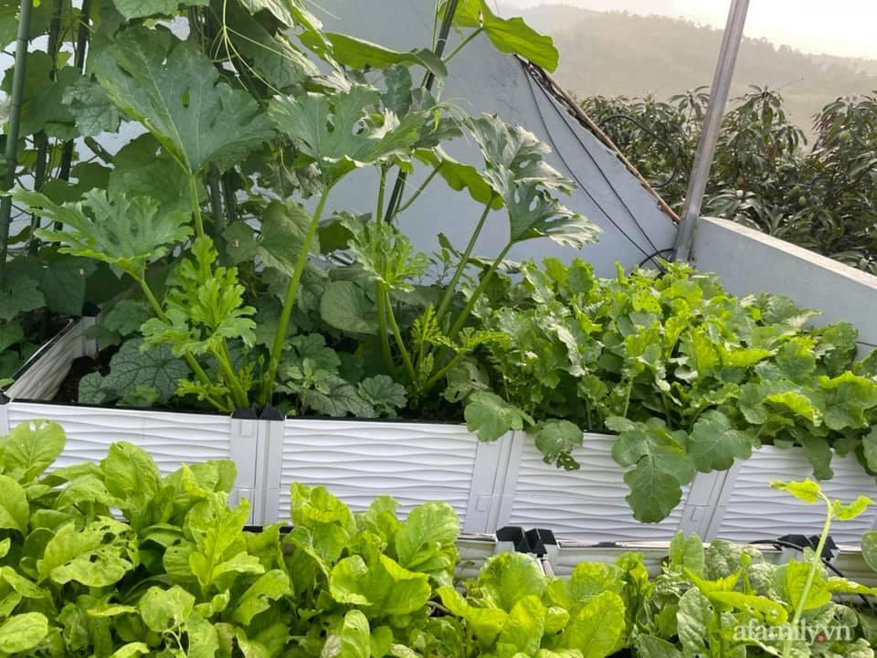 Khu vườn sân thượng chỉ 15m² nhưng quanh năm bội thu rau quả sạch của mẹ đảm ở Lào Cai-2