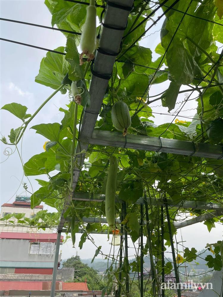 Khu vườn sân thượng chỉ 15m² nhưng quanh năm bội thu rau quả sạch của mẹ đảm ở Lào Cai-6
