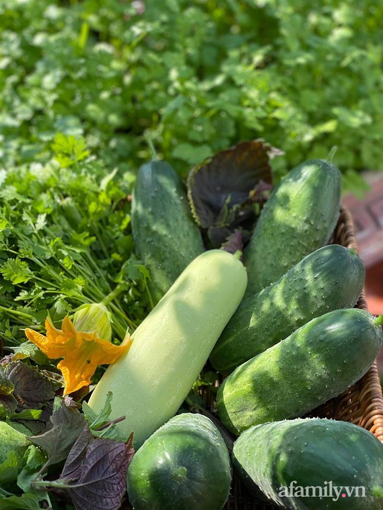 Khu vườn sân thượng chỉ 15m² nhưng quanh năm bội thu rau quả sạch của mẹ đảm ở Lào Cai-9