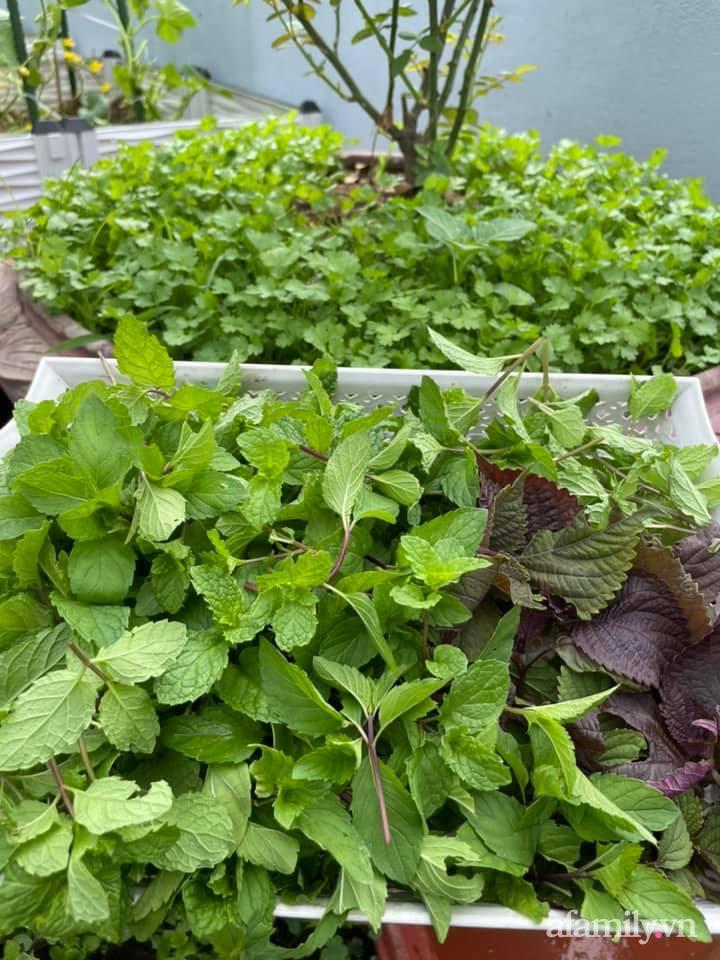 Khu vườn sân thượng chỉ 15m² nhưng quanh năm bội thu rau quả sạch của mẹ đảm ở Lào Cai-10