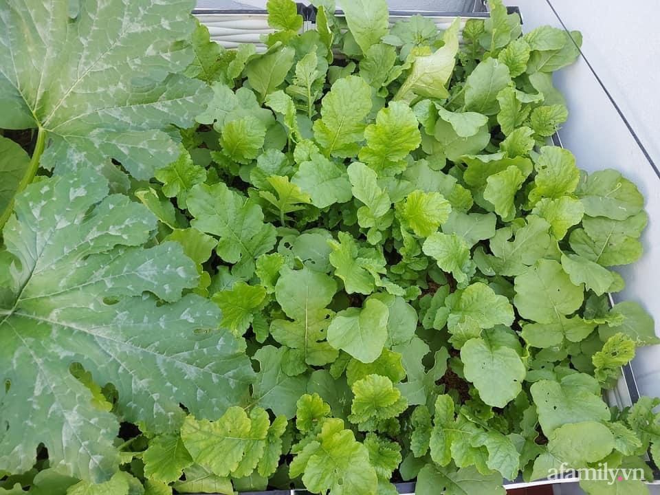 Khu vườn sân thượng chỉ 15m² nhưng quanh năm bội thu rau quả sạch của mẹ đảm ở Lào Cai-11