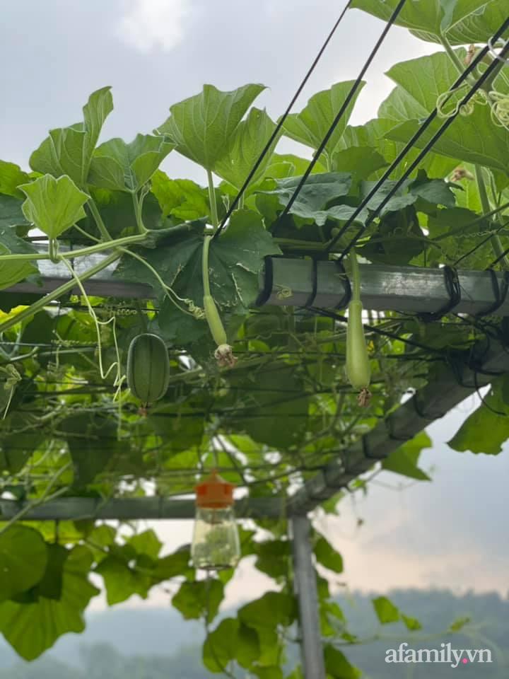 Khu vườn sân thượng chỉ 15m² nhưng quanh năm bội thu rau quả sạch của mẹ đảm ở Lào Cai-14