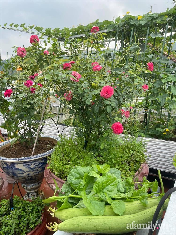 Khu vườn sân thượng chỉ 15m² nhưng quanh năm bội thu rau quả sạch của mẹ đảm ở Lào Cai-17