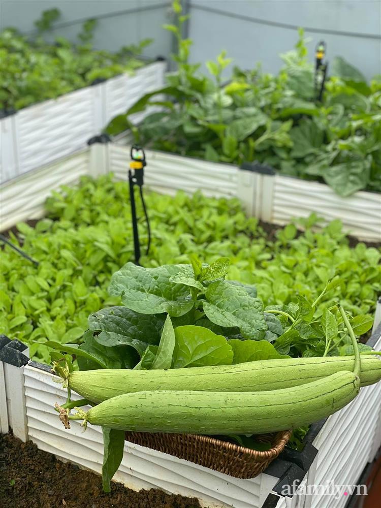 Khu vườn sân thượng chỉ 15m² nhưng quanh năm bội thu rau quả sạch của mẹ đảm ở Lào Cai-19