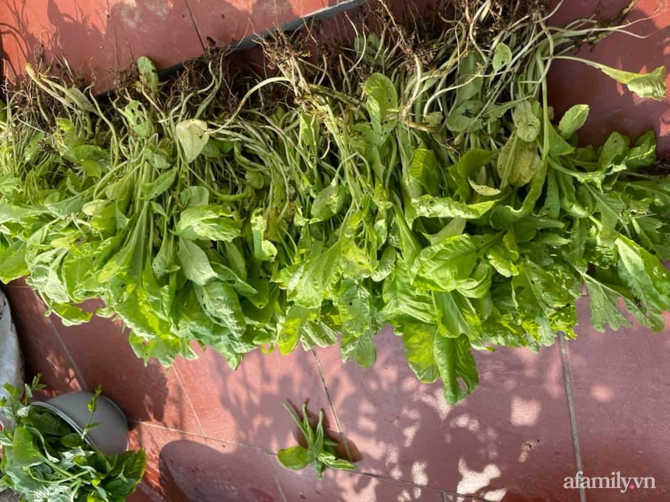 Khu vườn sân thượng chỉ 15m² nhưng quanh năm bội thu rau quả sạch của mẹ đảm ở Lào Cai-20