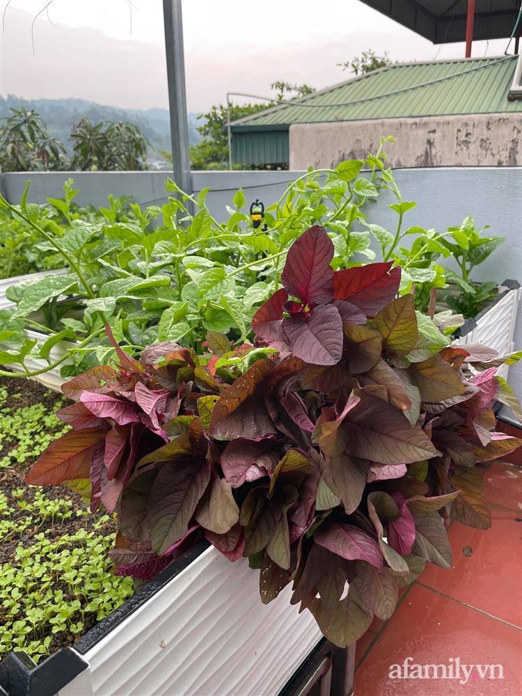 Khu vườn sân thượng chỉ 15m² nhưng quanh năm bội thu rau quả sạch của mẹ đảm ở Lào Cai-21