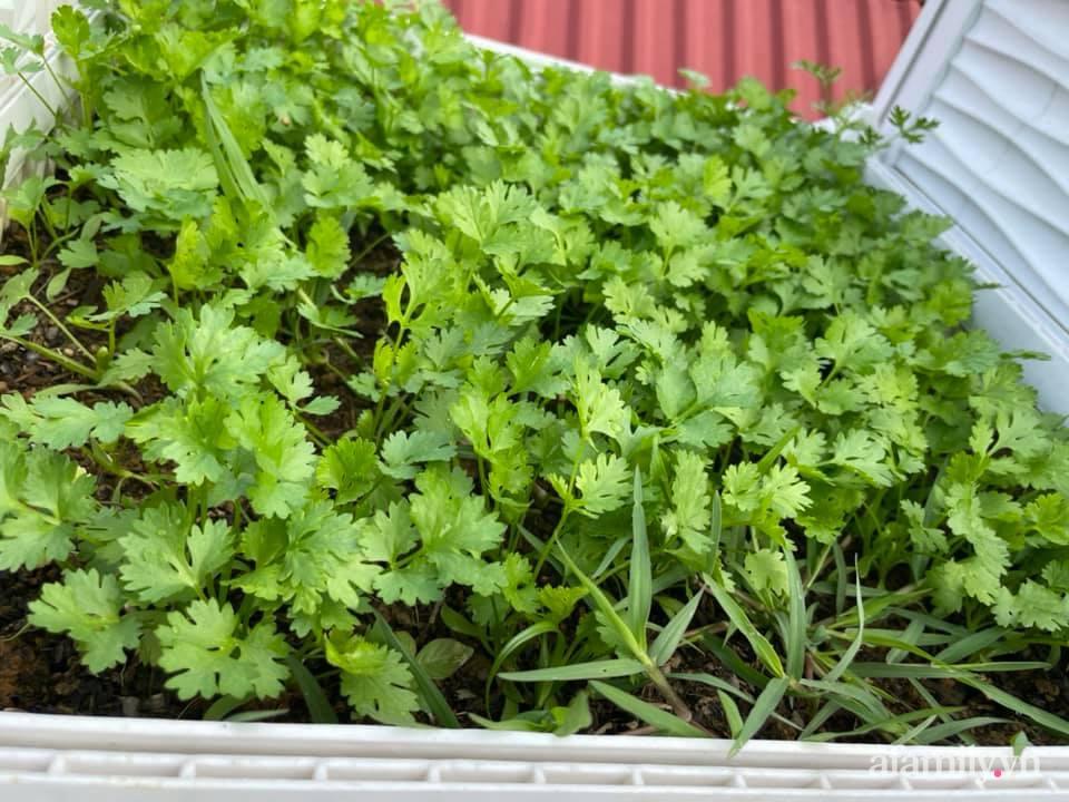 Khu vườn sân thượng chỉ 15m² nhưng quanh năm bội thu rau quả sạch của mẹ đảm ở Lào Cai-23