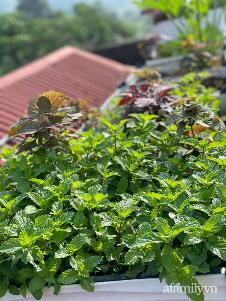 Khu vườn sân thượng chỉ 15m² nhưng quanh năm bội thu rau quả sạch của mẹ đảm ở Lào Cai-24