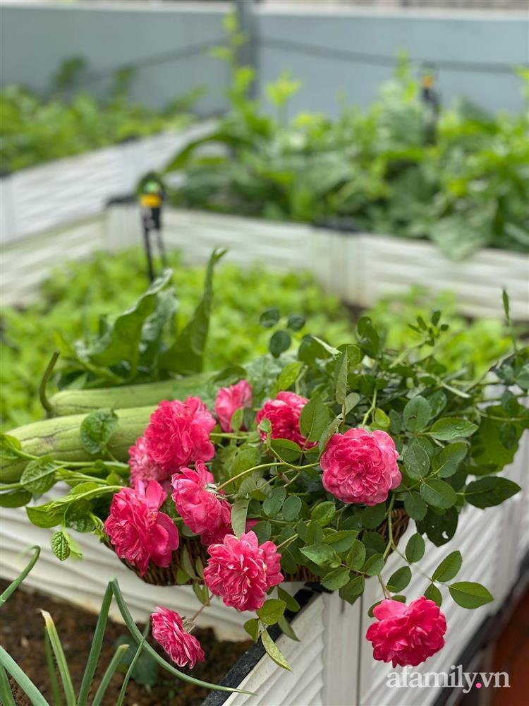 Khu vườn sân thượng chỉ 15m² nhưng quanh năm bội thu rau quả sạch của mẹ đảm ở Lào Cai-25