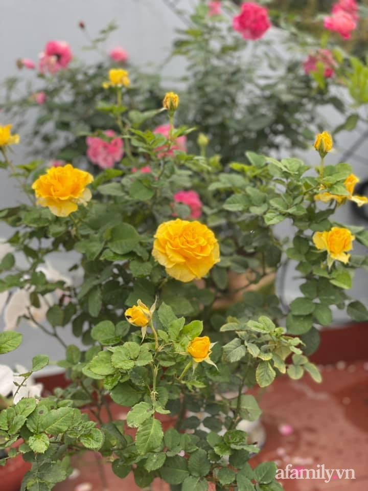 Khu vườn sân thượng chỉ 15m² nhưng quanh năm bội thu rau quả sạch của mẹ đảm ở Lào Cai-30