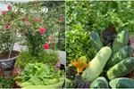Khu vườn sân thượng chỉ 15m² nhưng quanh năm bội thu rau quả sạch của mẹ đảm ở Lào Cai