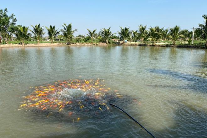 Bỏ nghề kỹ sư về quê đào ao nuôi cá, 9x Hải Phòng kiếm tiền tỷ đều tay-1