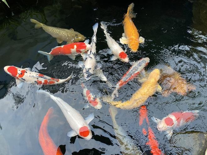 Bỏ nghề kỹ sư về quê đào ao nuôi cá, 9x Hải Phòng kiếm tiền tỷ đều tay-3
