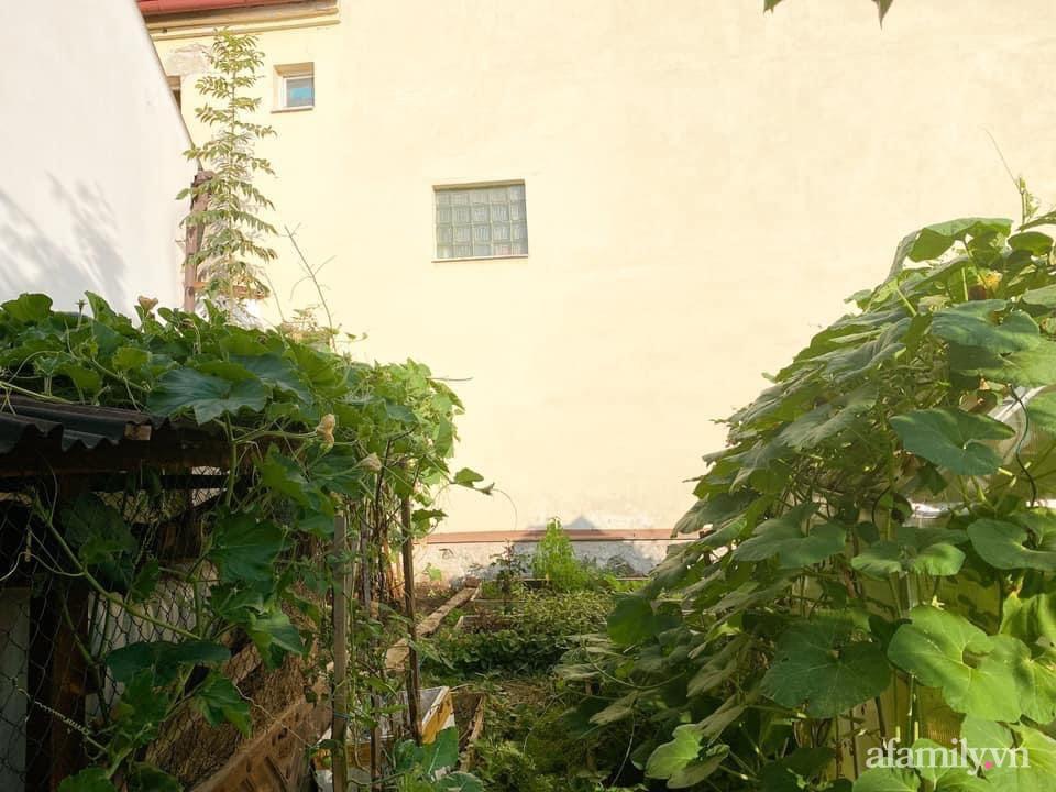 Vườn rau quanh năm tốt tươi với đủ loại rau quả của mẹ Việt-1