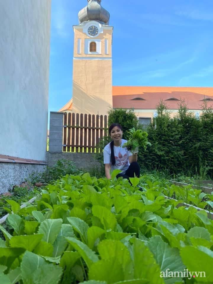 Vườn rau quanh năm tốt tươi với đủ loại rau quả của mẹ Việt-2