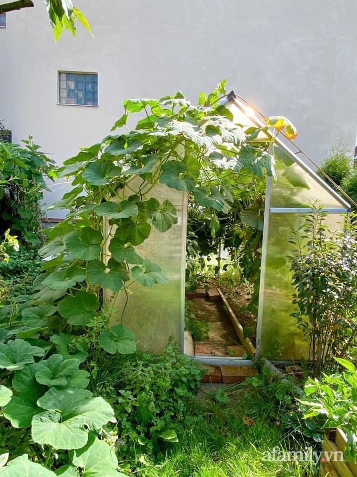 Vườn rau quanh năm tốt tươi với đủ loại rau quả của mẹ Việt-3