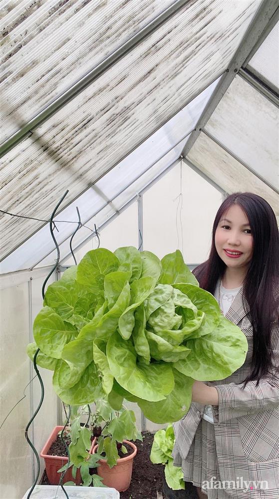 Vườn rau quanh năm tốt tươi với đủ loại rau quả của mẹ Việt-5