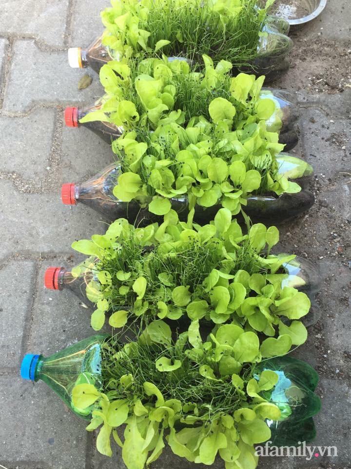 Vườn rau quanh năm tốt tươi với đủ loại rau quả của mẹ Việt-24
