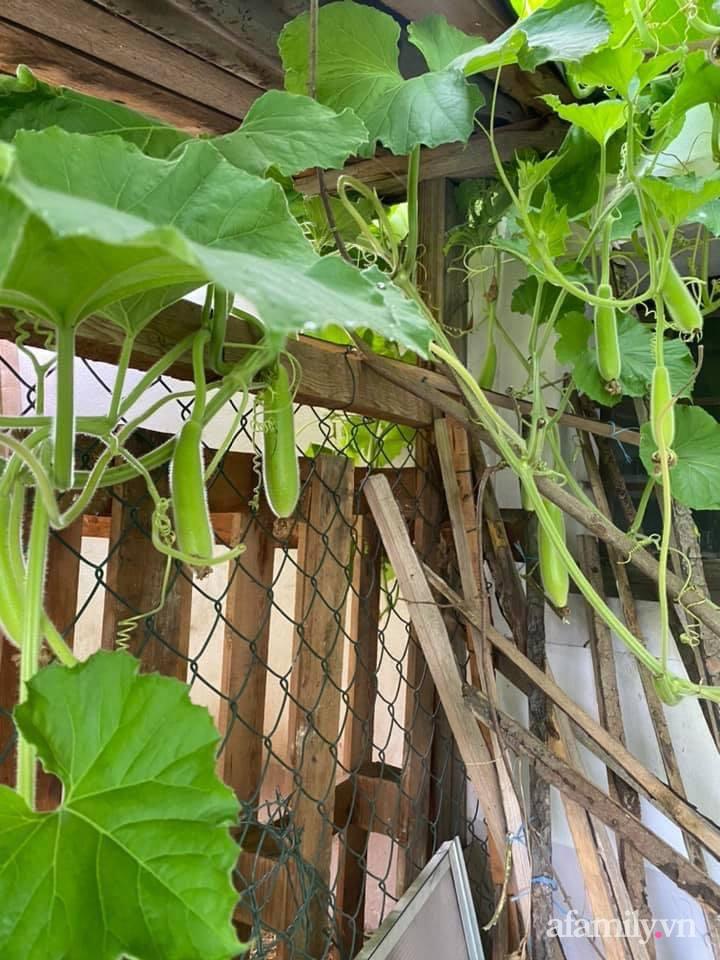 Vườn rau quanh năm tốt tươi với đủ loại rau quả của mẹ Việt-30