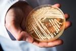 COVID-19 tạo điều kiện lý tưởng cho 'siêu nấm' chết người phát triển